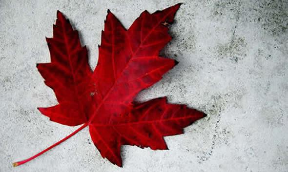 Canada Day na Maple Bear Campinas